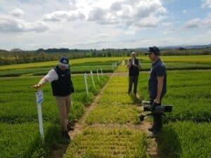 360 video filming - man in field of crops